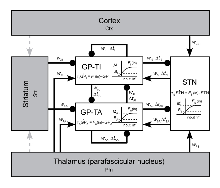 Supercomputer modelling of basal ganglia circuit dynamics.