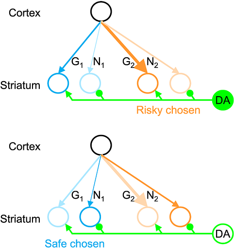 Learning Reward Uncertainty in the Basal Ganglia.