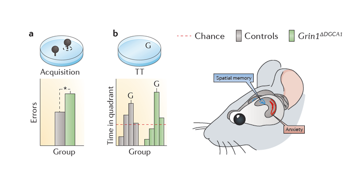 Hippocampal synaptic plasticity, spatial memory and anxiety.