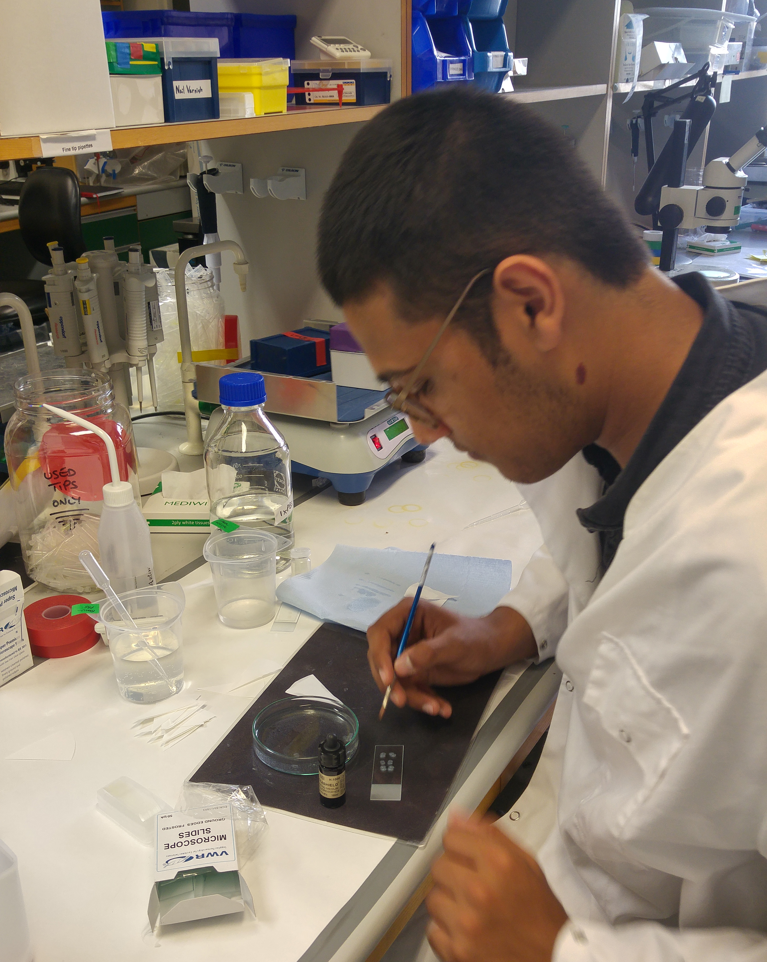 In2scienceUK student Abhay working on his collection of mouse brain sections at the MRC BNDU.
